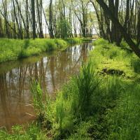 NPR Bohdanečský rybník