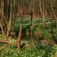 Lanškrounské rybníky- Zadní potok