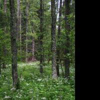 Olšina v Novolhotském lese