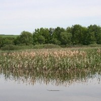 Rybník Dívčí Hrad