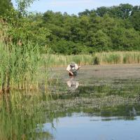 Nový rybník u Loučně