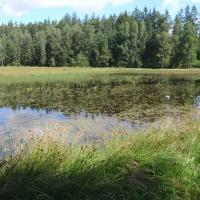 Horní Lesák