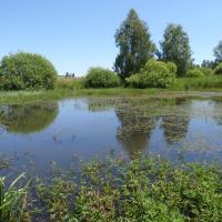 Tůň u Matenského rybníka