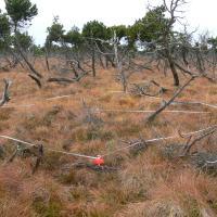Polské rašeliniště - monitorovací plocha