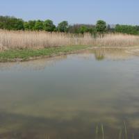Tůň u Kopičáckého rybníka