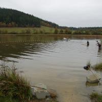 Výlov Býkovického rybníka