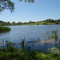 Býkovický rybník