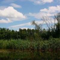 Litorál rybníka Farář