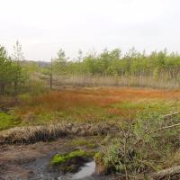 Rašelinistě ve výtopě rybníka Rod