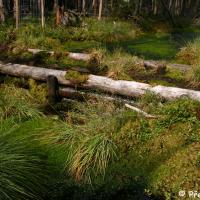 NPR Kladské rašeliny - Malé rašeliniště