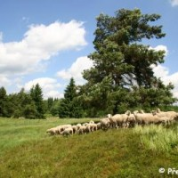 Křížky National Nature Monument - sheep pasture