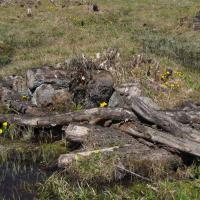 Skalské rašeliniště