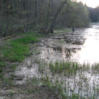 Čížov - lesní rybník
