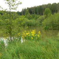 Litorál rybníku Vražda