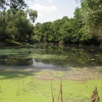 Sekulská Morava - monitoring pijavky lékařské