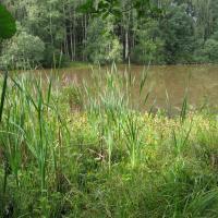 PR Pomezní rybník