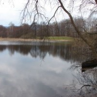 Koubovský rybník