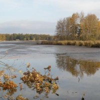 PR Rybníky u Vitmanova - rybník Nový Vdovec