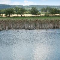 Opatovské rybníky