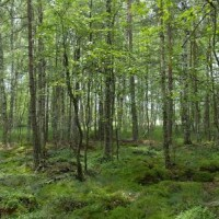 Rašeliniště Olšina