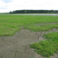 Veselský rybník - konec volné hladiny