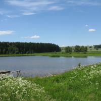 Pařezný rybník