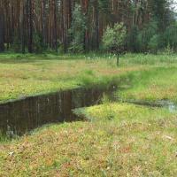 Mariánský rybník