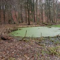 Lesní rybník U Polánky