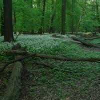 PR Polanský les