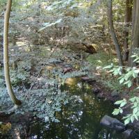 Jevanský potok pod Pilským rybníkem
