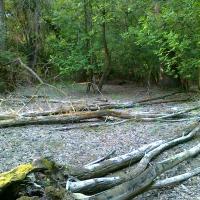 EVL Přísnotický les za mimořádného sucha