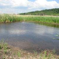 Tůň v NPP Žehuňský rybník u náhonu