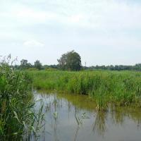 Pohled do rákosin na rybníku