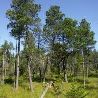 NPR Kladské rašeliny, část Malé rašeliniště
