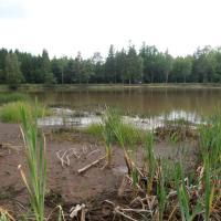 Rybník Podhorský - pokles hladiny