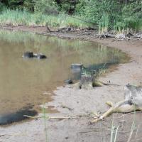 Rybník Podhorský