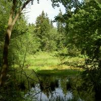 PR Březina - rašeliniště pod Bukovým vrchem