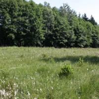 Přechodová rašeliniště - monitorovací plocha