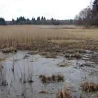 Rybník Kačer