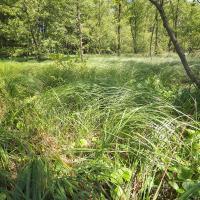 Monitorovací plocha - mezotrofní vegetace bahnitých substrátů