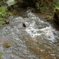 Vortovský potok