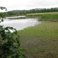 Hamerské rybníky