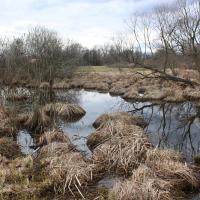Plané loučky Nature Reserve