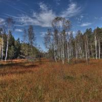 Radostínské rašeliniště
