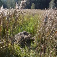 Vojenské louky - odkvetlý trs obsekané popelivky a zapomenutá hromádka