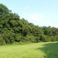 Duby letní v Mydlovarském luhu