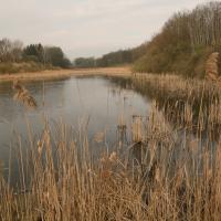 Kravský rybník