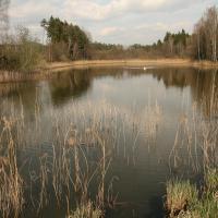 Novodvorský rybník