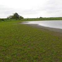 Rybník Donát - obnažené dno