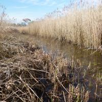 PR Skučák - propojovací kanál mezi tůněmi a rybníkem
